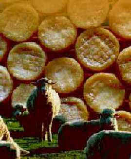 The �vora Cheese (DOP)